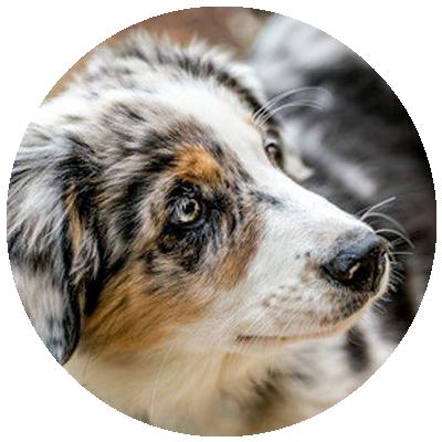 Hunde der Hundeschule mit Herz in Cadolzburg Desiree Höck Nürnberg