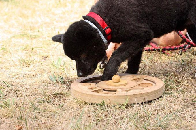 Hundetraining Lernverhalten von Hunden